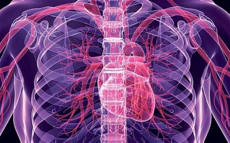 heart-doppel_2630407b
